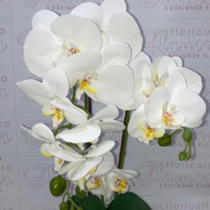 Orquídea Phalaenopsis Artificial