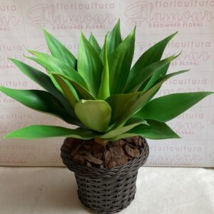 Agave Artificial